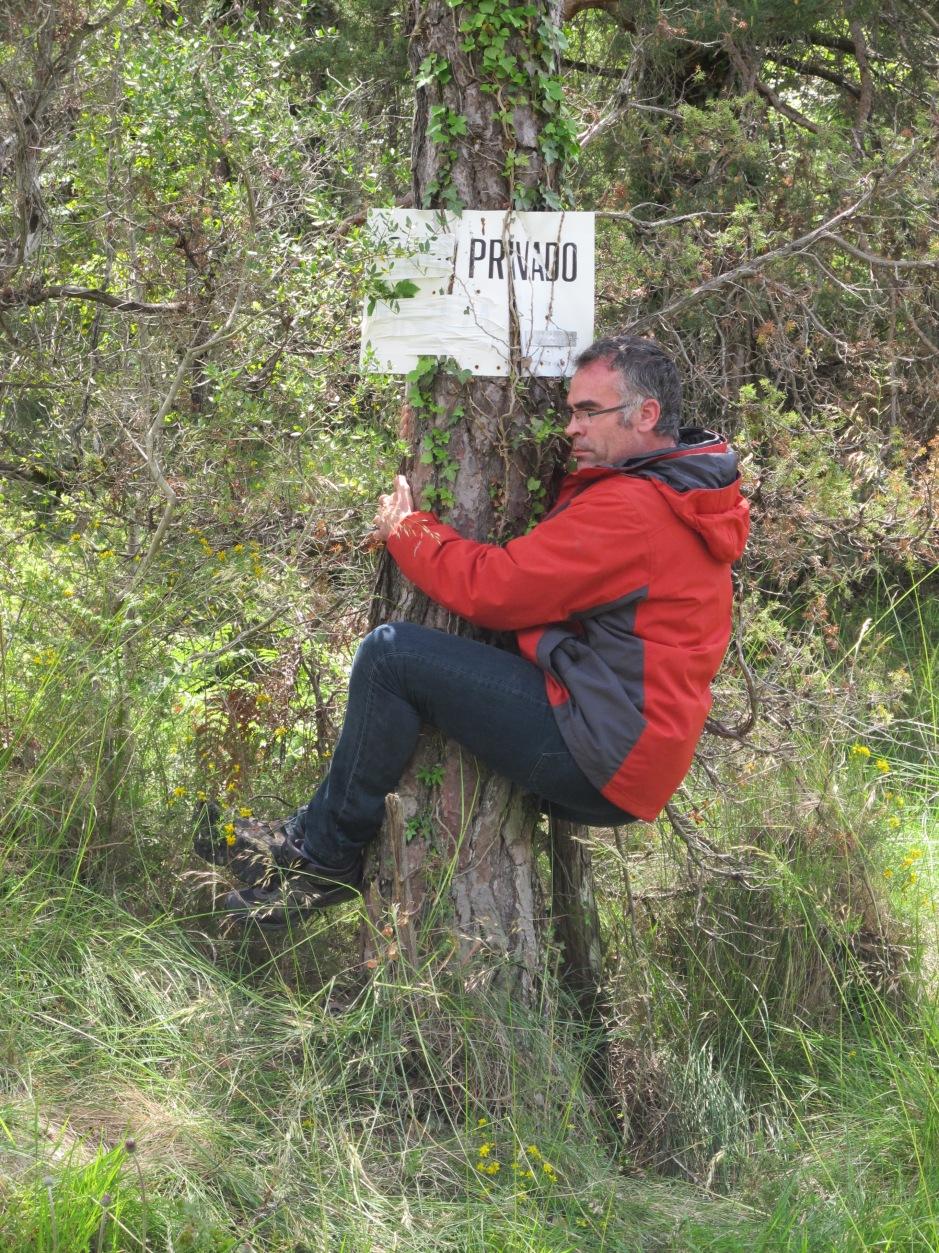 Poseer un bosque por José Otero